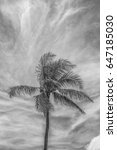Small photo of Black and White Profile of Brisk Trade Wind Buffeting a Coconut Palm Tree in Hawaii with High Cirrus Clouds Above.