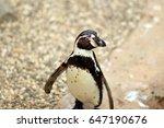 penguin in zoo | Shutterstock . vector #647190676