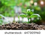 young tree growth up concept...   Shutterstock . vector #647305960