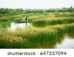 mekong delta landscape with... | Shutterstock . vector #647337094