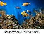 Nemo Fishes In Sea Aquarium