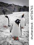 Three Penguins Standing Rocks...