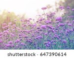 a beautiful purple flower in... | Shutterstock . vector #647390614