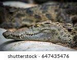 predator | Shutterstock . vector #647435476