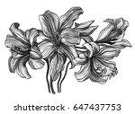 white cherry apricot exotic... | Shutterstock . vector #647437753