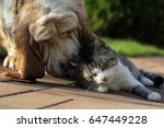 Stock photo dog and cat together 647449228