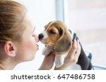 Beagle Puppy Kissing A Girl