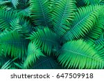 Beautiful Green Fern Leaves In...