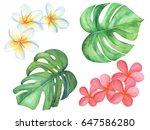 watercolor painting of monstera ... | Shutterstock . vector #647586280