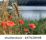 red poppies | Shutterstock . vector #647628448