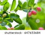 "thai fruit ""carandas plum"" in... | Shutterstock . vector #647653684"