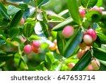 "thai fruit ""carandas plum"" in... | Shutterstock . vector #647653714"