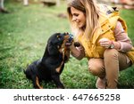 Stock photo young woman training and playing with puppy on grass in park rottweiler dog puppy details 647665258
