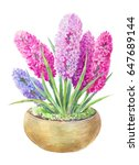 watercolor hyacinth in a pot.... | Shutterstock . vector #647689144