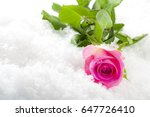 Small photo of frozen winter red rose covered in snow and frost laying on the ground surrounded by ice crystals and water drops, a sign of unflattering lasting passion with copy space