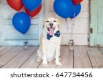patriotic dog in a bowtie and... | Shutterstock . vector #647734456