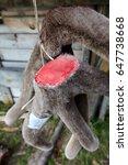 siberian stag  maral   breeding ... | Shutterstock . vector #647738668