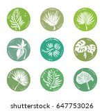 tropical plants icons. vector... | Shutterstock .eps vector #647753026