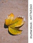 Yellow Granadilla Leaf