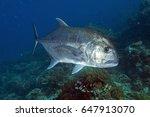 giant trevally  caranx...   Shutterstock . vector #647913070