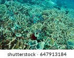 Small photo of Reef scenic with Acropora nobilis and Echinopora pacificus, hardcorals Komodo Indonesia