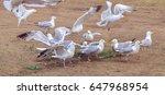 russian seagull   | Shutterstock . vector #647968954