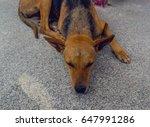 resting dog | Shutterstock . vector #647991286