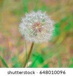 green fur ball grass   Shutterstock . vector #648010096