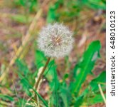 green fur ball grass | Shutterstock . vector #648010123