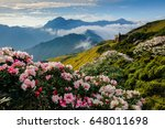 rhododendron  yushan... | Shutterstock . vector #648011698