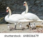 swan family at lake constance....   Shutterstock . vector #648036679