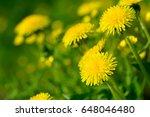 Yellow Dandelion Flowers ...