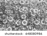 chrysanthemum in the park style ... | Shutterstock . vector #648080986