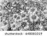 chrysanthemum in the park style ... | Shutterstock . vector #648081019