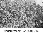 chrysanthemum in the park style ... | Shutterstock . vector #648081043