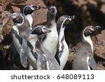 humboldt penguin   Shutterstock . vector #648089113
