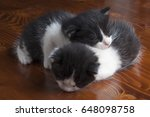 two young cats on a wooden... | Shutterstock . vector #648098758
