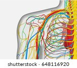 medically accurate anatomy... | Shutterstock .eps vector #648116920
