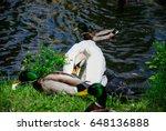 a swan on a pond eats bread... | Shutterstock . vector #648136888