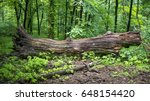 A Fallen Tree Is Rotting In Th...