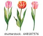 watercolor set of tulips  hand... | Shutterstock . vector #648187576