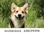 happy and active purebred welsh ... | Shutterstock . vector #648199498