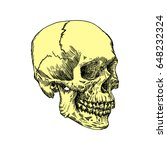 anatomic skull  weathered and... | Shutterstock . vector #648232324