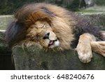 lion close up | Shutterstock . vector #648240676