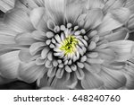 Black And White Macro Flower