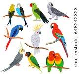 Parrots Set