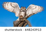 Great Horned Owl With...