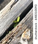 plant sprout from the timber... | Shutterstock . vector #648310093