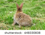 view of rabbit from behind   Shutterstock . vector #648330838