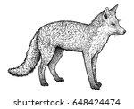 fox illustration  drawing ... | Shutterstock .eps vector #648424474